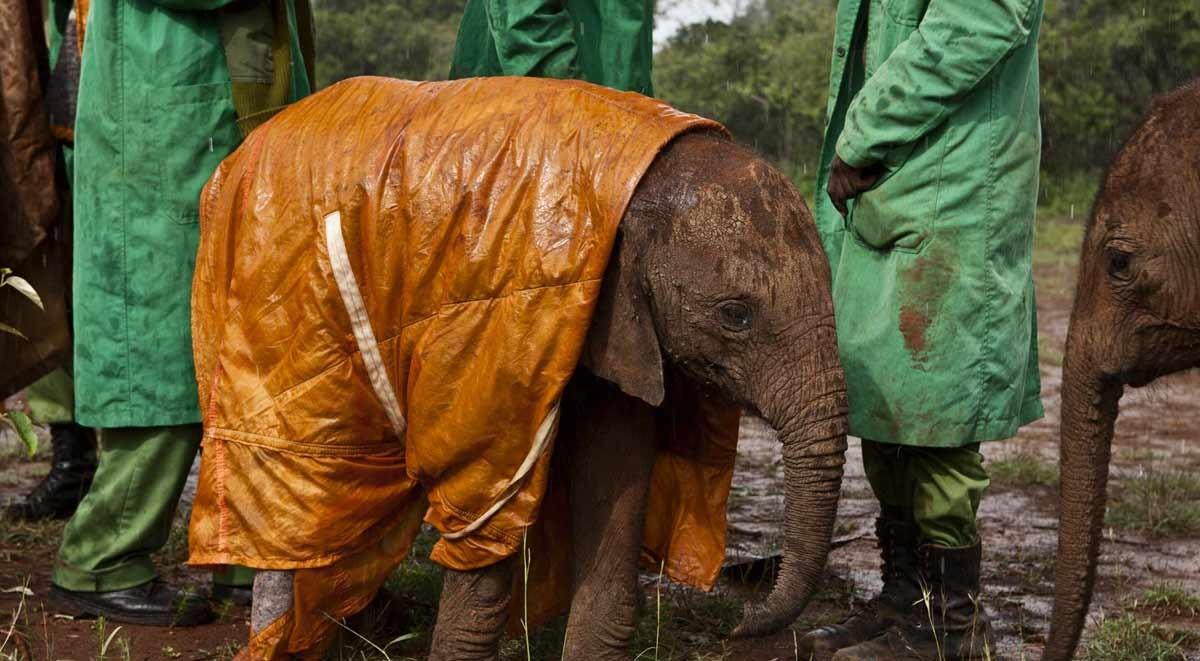 elephan-orphanage