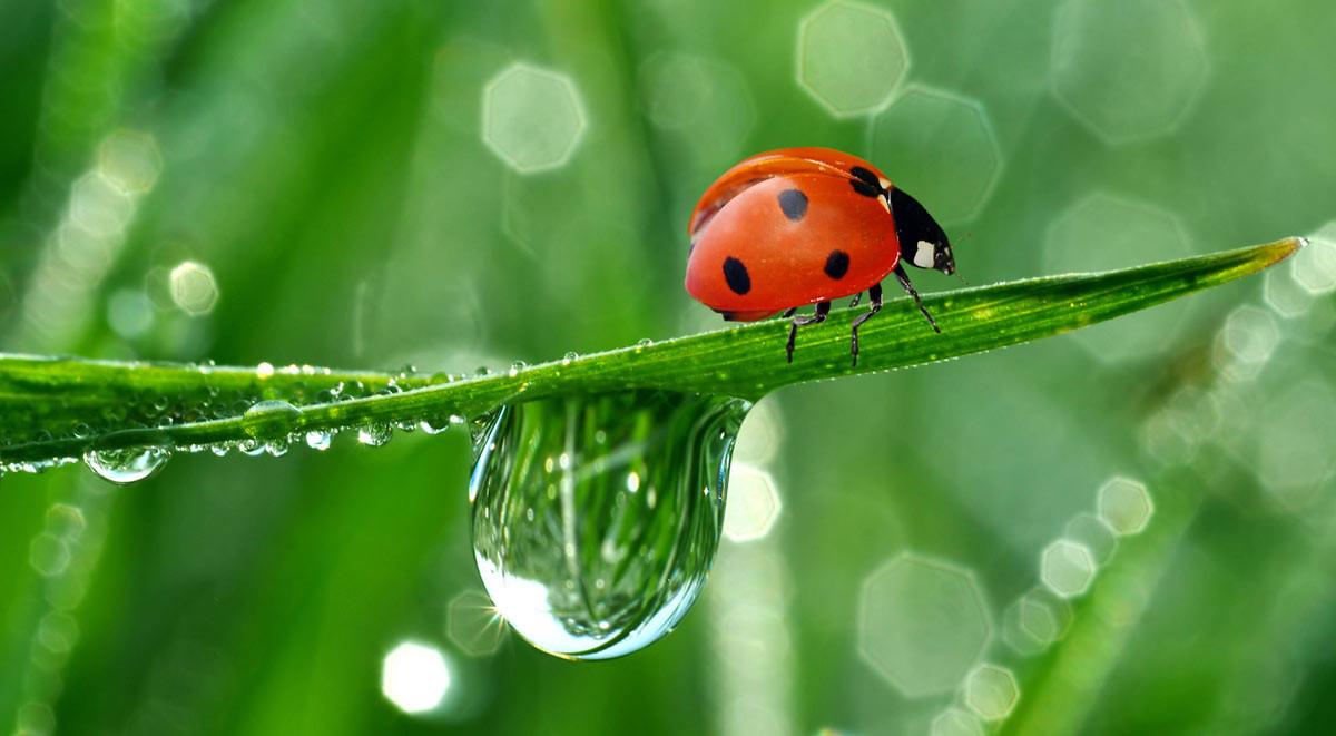 lady-bug-(fi)
