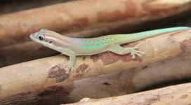 lizard-(fi)