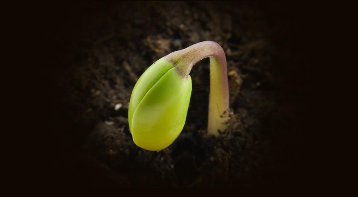 seed-(fi)